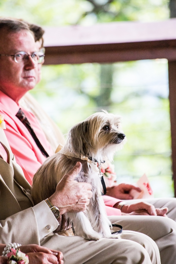 Chinese Crested dog attending wedding
