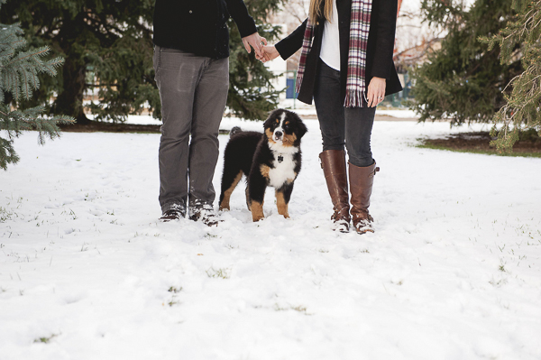 Bernese Mountain Dog puppy with couple holding hands, winter dog portraits