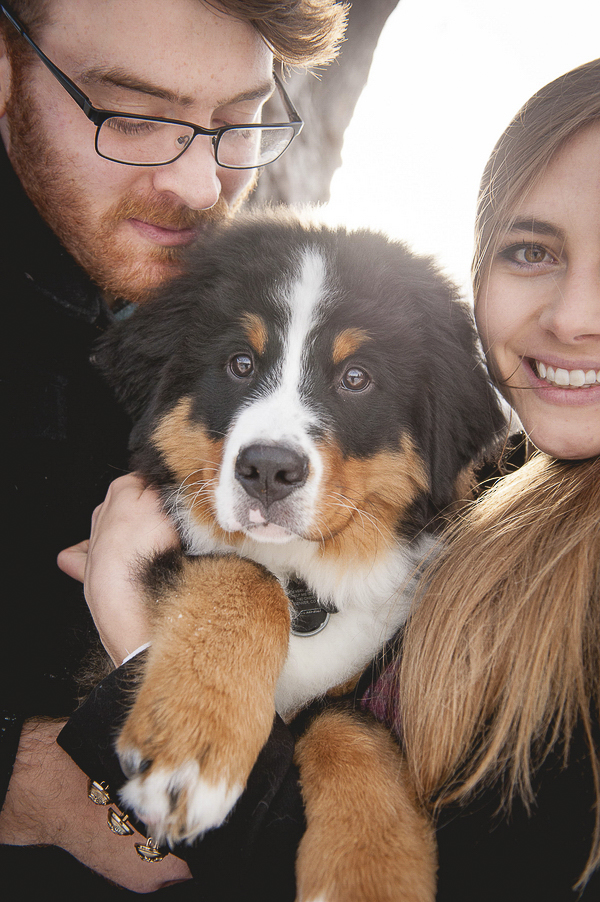 couple and Bernese Mountain Dog puppy