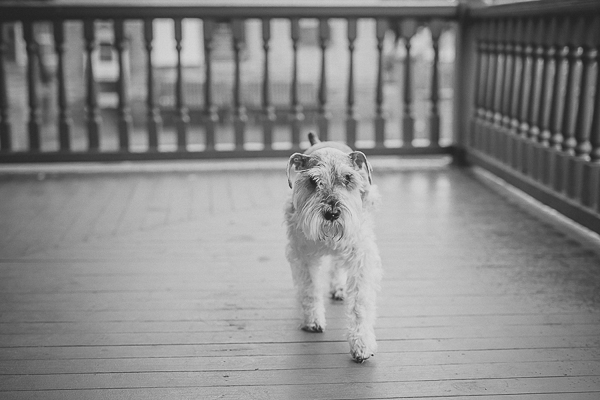 © Courtney Sargent Photography | Schnauzer on porch, black white dog portraits