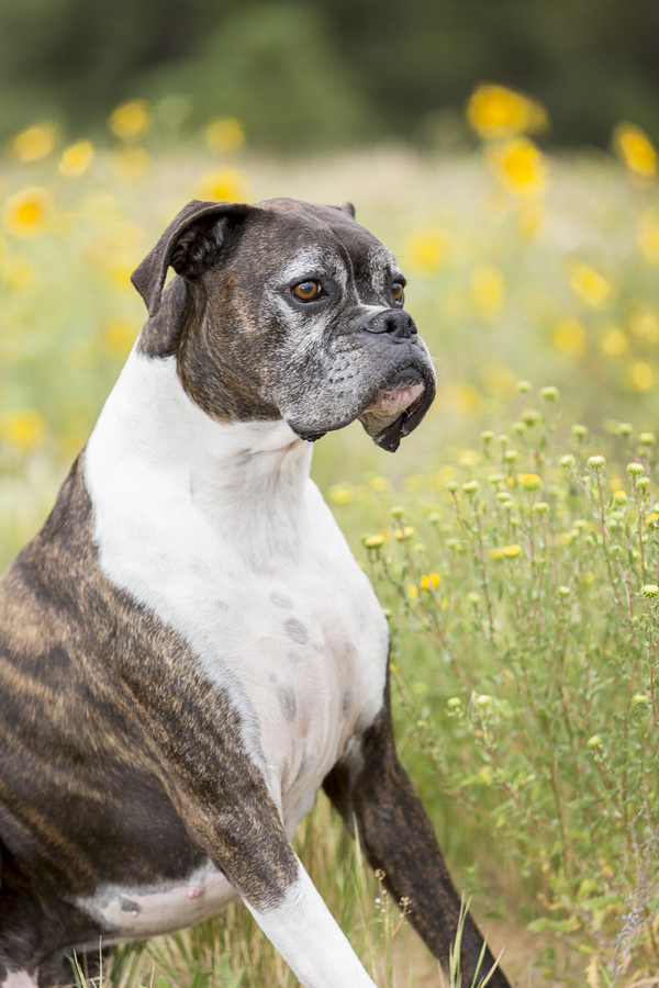 handsome-dog, yellow flowers © Tangled Lilac Photography