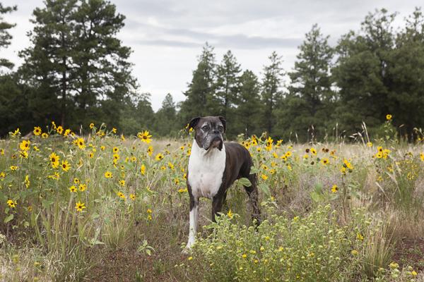 Flagstaff Pet Dog Training