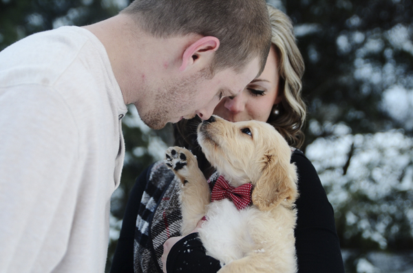 Puppy Love:  Bentley the Goldendoodle puppy