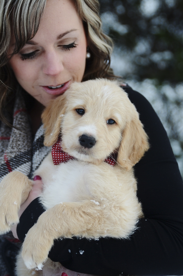 woman holding Goldendoodle puppy winter portraits