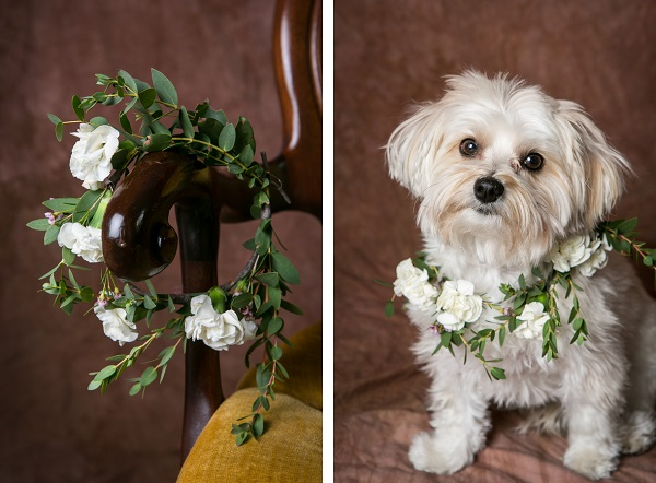 white and green floral wreath for dog, Morkie sitting on chair