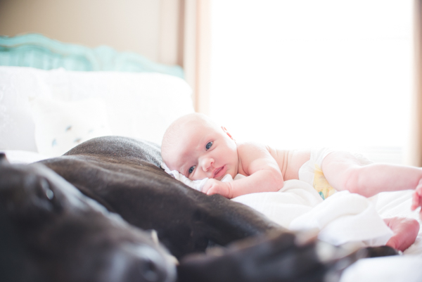M&JPHOTOGRAPHY-newborn-and dog