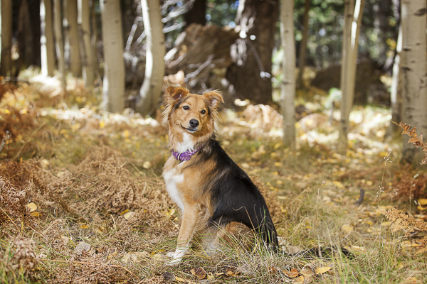 beautiful mutt sitting in front of trees, Arizona dog photography