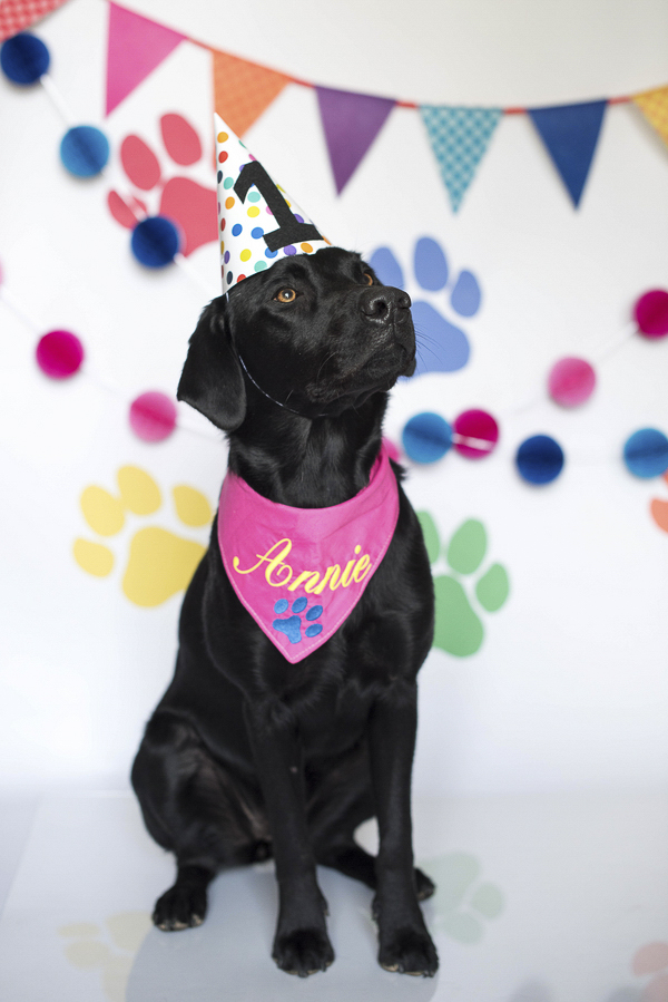 Dog Excited About Birthday Cake