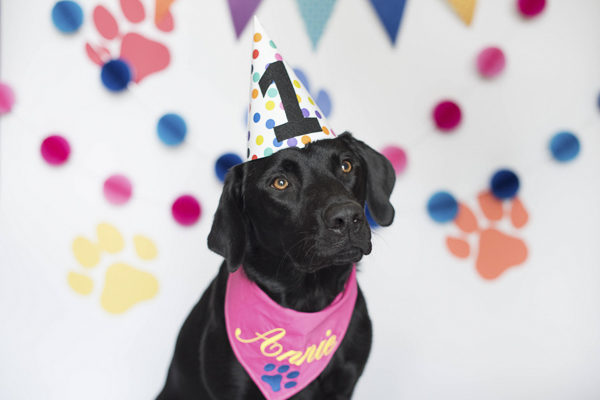 Dog Pawty:  Annie & Wrangler's Pupcake Smash