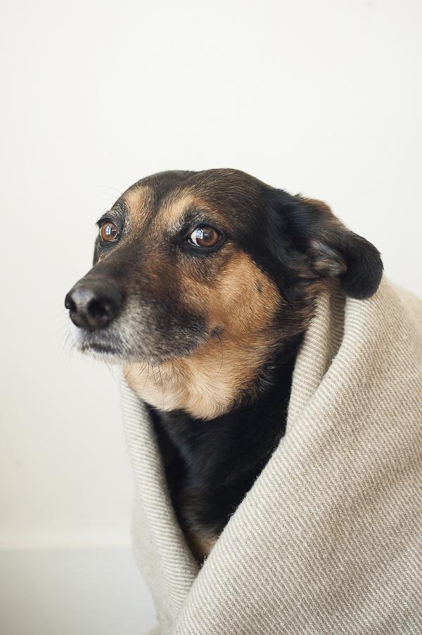funny dog photo, worried dog expression