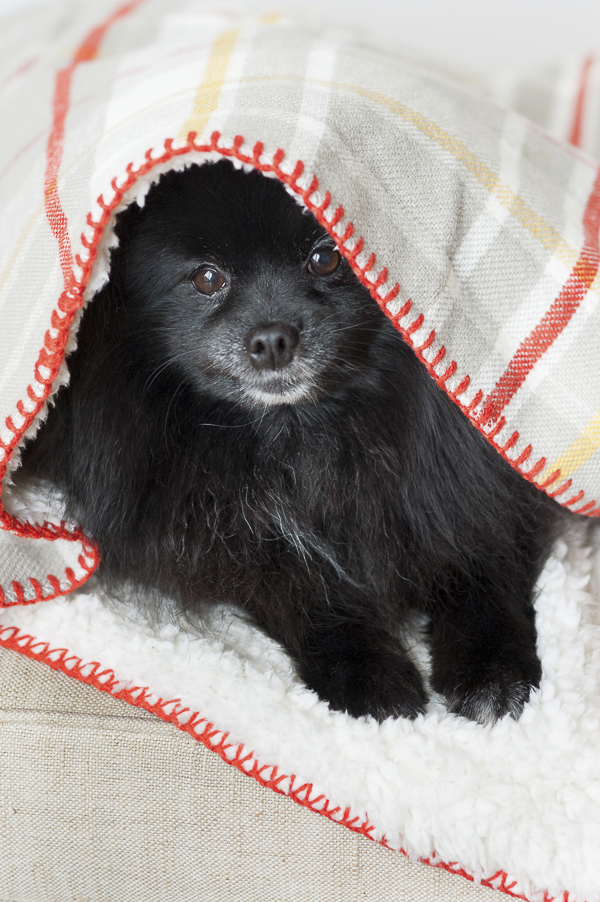 adorable dog photos, Syracuse lifestyle dog photography