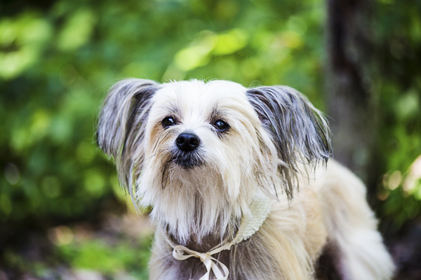 Best Dog:  Captain the Chinese Crested Dog