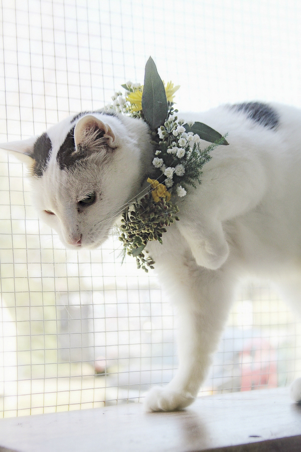 white cat wearing floral wreath Worcester County Humane Society
