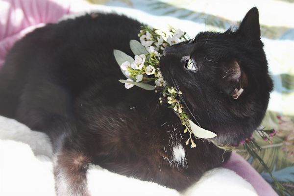 cat wearing floral wreath Worcester County Humane Society