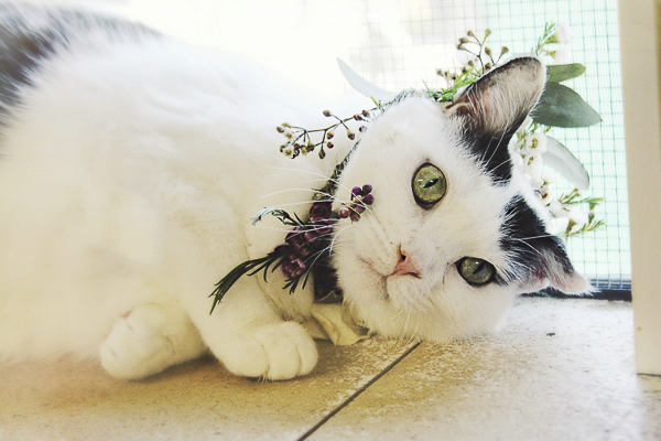 white with black cat wearing floral wreath Worcester County Humane Society