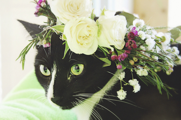 black and white cat wearing floral headpiece Worcester County Humane Society, roses, baby's breath