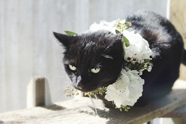 black cat wearing floral wreath Worcester County Humane Society