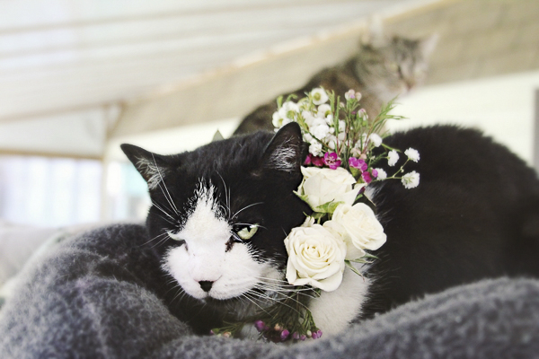 black white cat wearing floral wreath Worcester County Humane Society