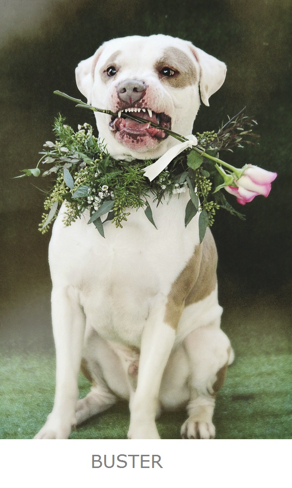 dog holding rose in mouth, floral wreath for dog, adoptable dog