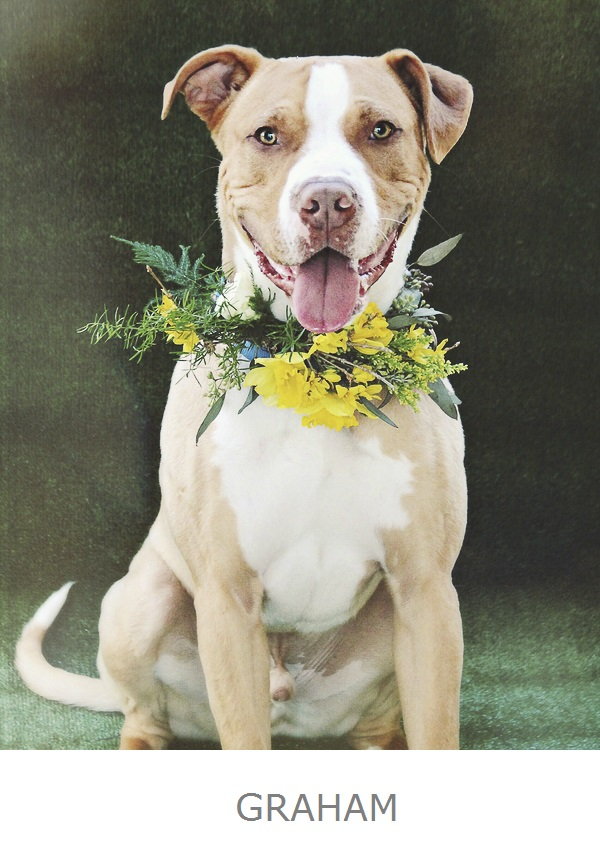 handsome, happy brown, white mixed breed wearing yellow floral wreath, adoptable dog flowers