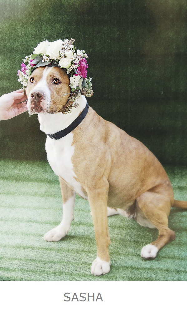 Adoptable Pets Worcester County Humane Society-floral headpiece