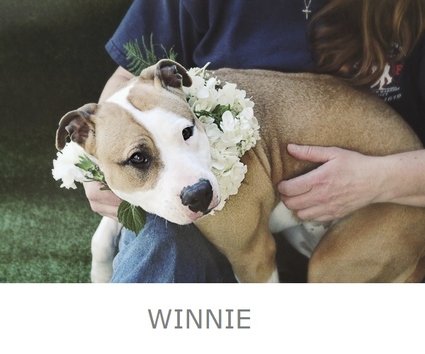Adoptable puppy wearing white flower wreath Worcester County Humane Society