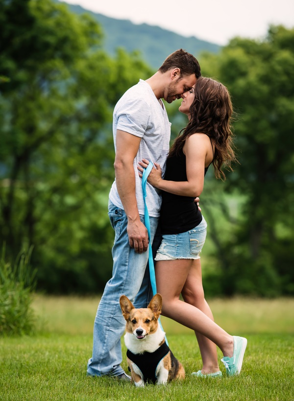 romantic engagement photography with Corgi, Welsh Corgi wearing harness, blue leash