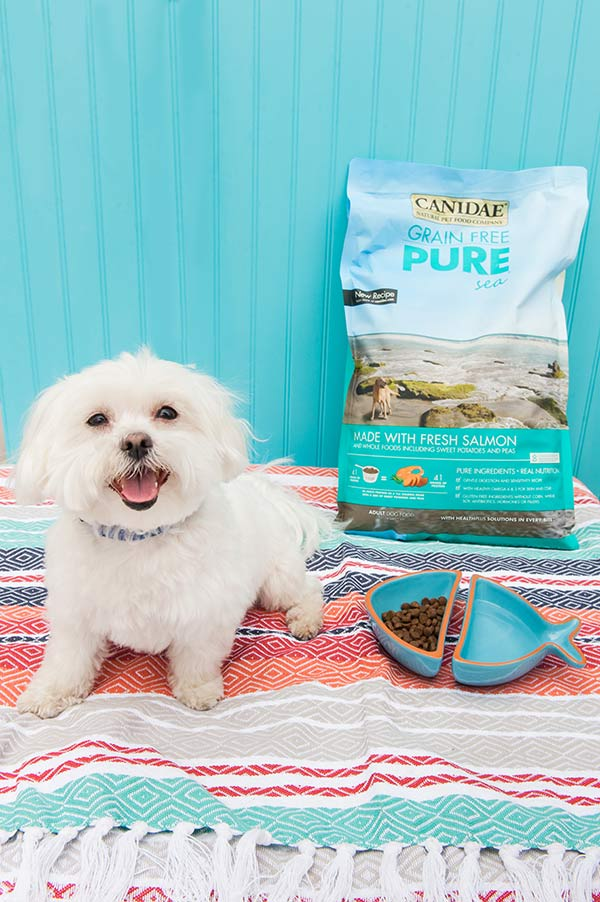 Grain-Free-Dog-Food-With-Fresh-Salmon-Daily-Dog-Tag, Maltese