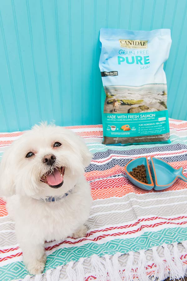 CANIDAE®Grain-Free-Dog-Food-With-Fresh-Salmon-Daily-Dog-Tag, Maltese with fish bowl of dog food