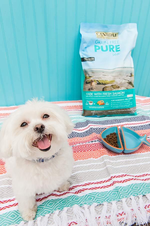 CANIDAE®Grain-Free-Dog-Food-With-Fresh-Salmon-Daily-Dog-Tag, Maltese with fish bowl of dog food