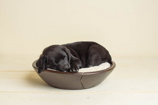 Exceptional Partner puppy sleeping in bowl
