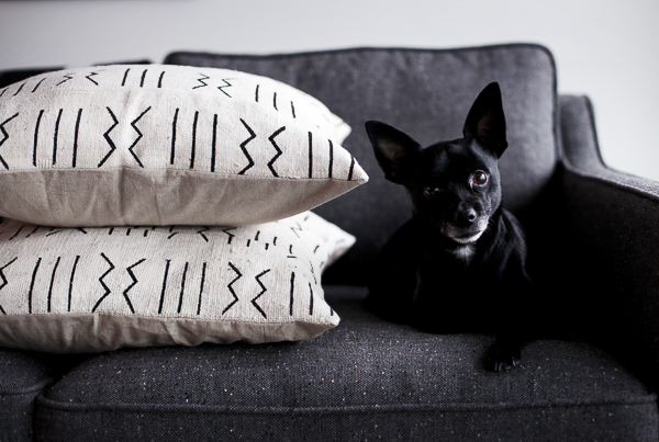 small dog on sofa, Loom Goods pillows, Modest Marce, dogs on furniture