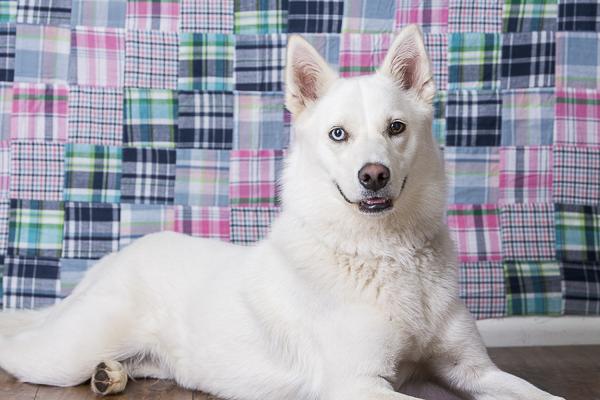 Nesbah-fundraiser calendar for Second Chance Rescue, studio dog photography