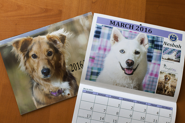Second Chance Animal Rescue calendar, © Tangled Lilac Photography | Husky/Shepherd mix, studio dog photography