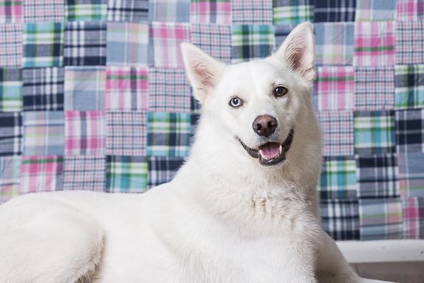 Nesbah-fundraiser calendar for Second Chance Animal Rescue