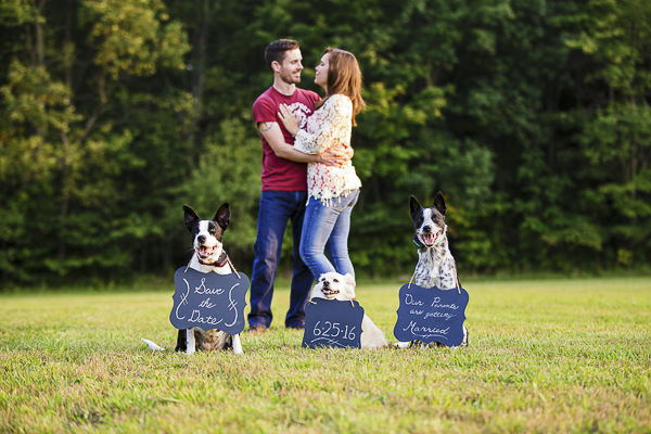 dogs holding save-the-date signs, engagement session with dogs