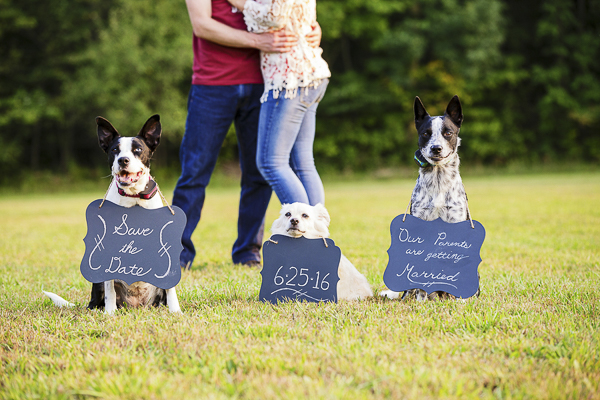 Dogs holding save-the-date signs
