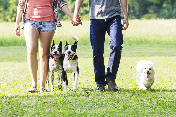 Picnic Engagement session with dogs, couple holding hands walking with dogs