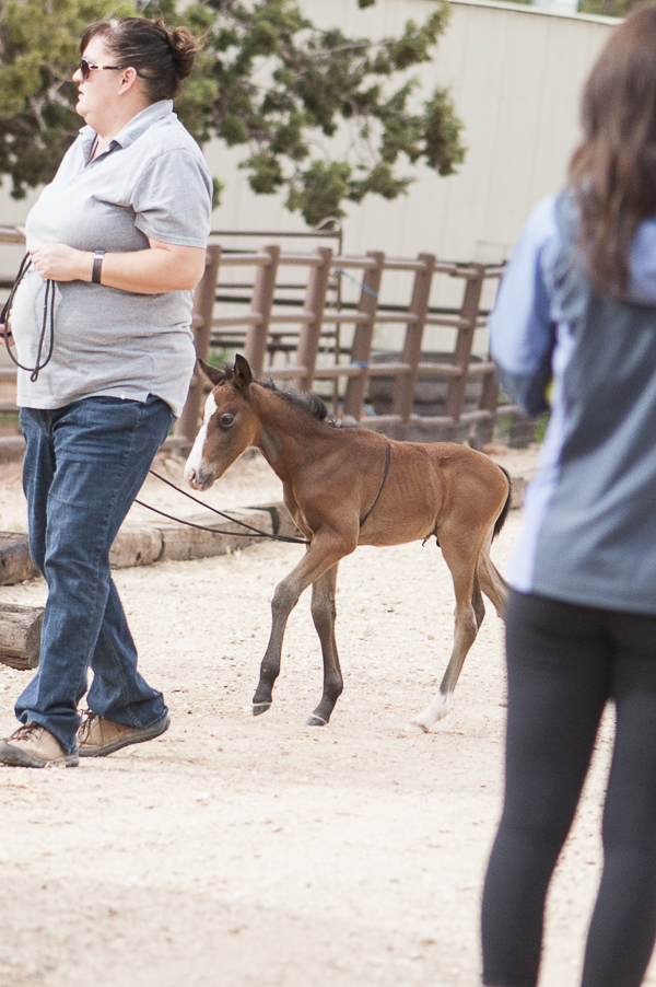 Best Friends Animal Sanctuary, one-month-old colt