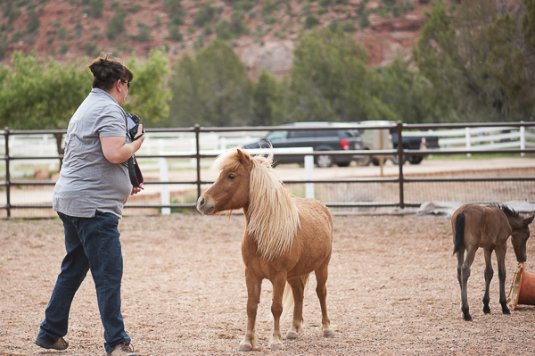 Best Friends Animal Sanctuary, miniature horse and colt