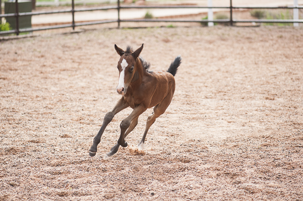 foal frolicking at Best Friends Animal Sanctuary