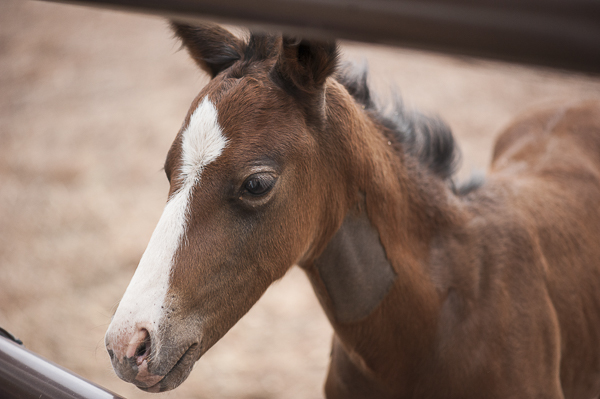 © Daily Dog Tag | Best Friends Animal Sanctuary, young foal, Prince