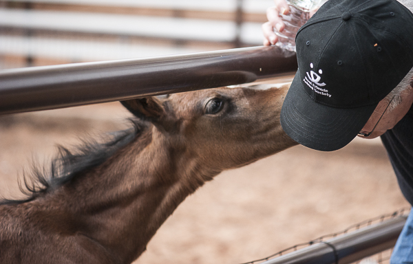 young foal nuzzling man, © Daily Dog Tag   Best Friends Animal Sanctuary