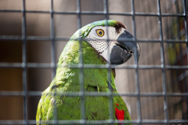 Macaw in aviary   Best Friends Animal Sanctuary