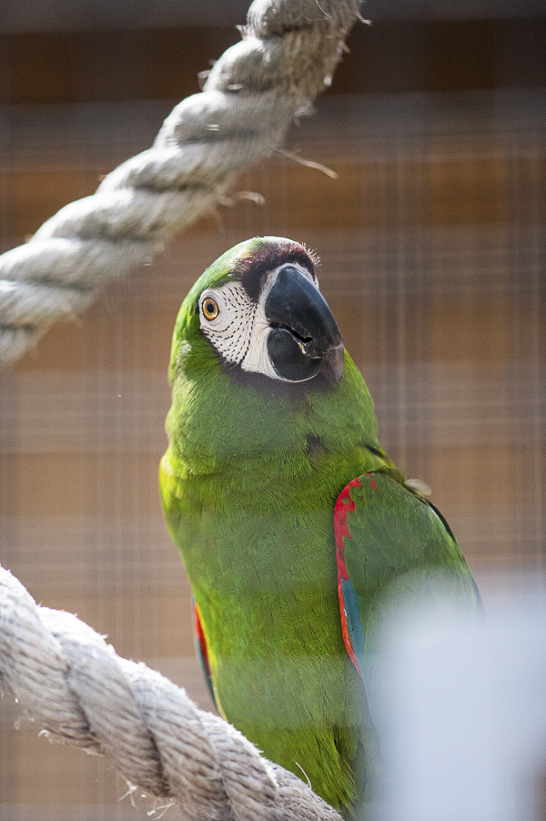 Macaw in aviary on rope swing | Best Friends Animal Sanctuary