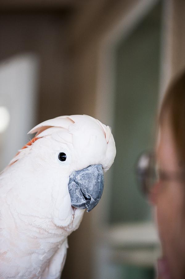 Cockatoo   Best Friends Animal Sanctuary