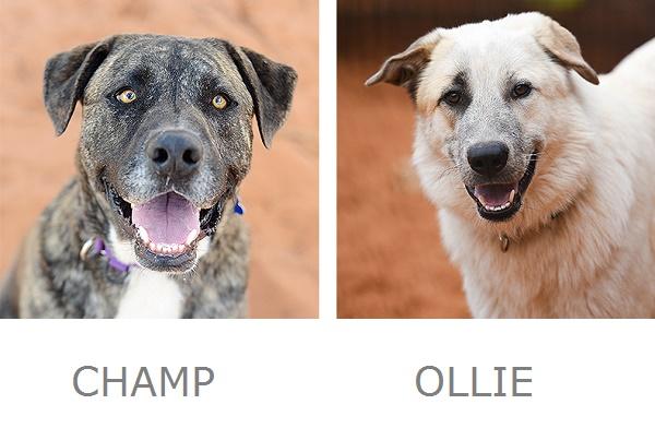 Champ, Ollie Best Friends Animal Sanctuary
