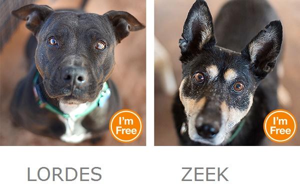 Lordes Zeek Best Friends Animal Sanctuary