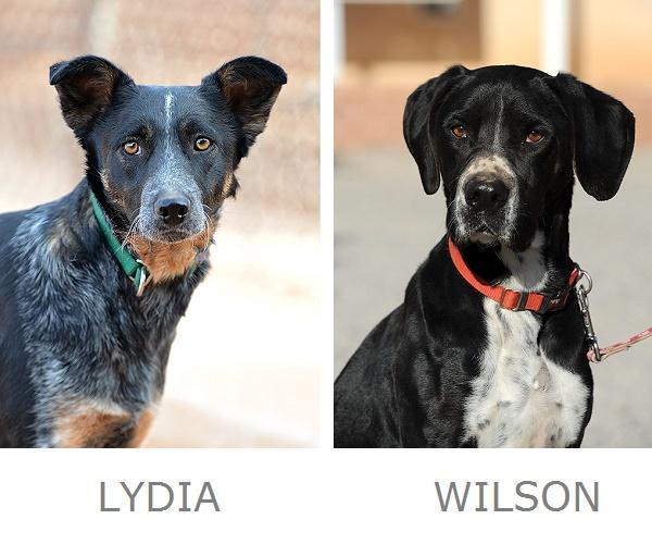 Lydia Wilson Adoptable Dogs Best Friends Animal Sanctuary