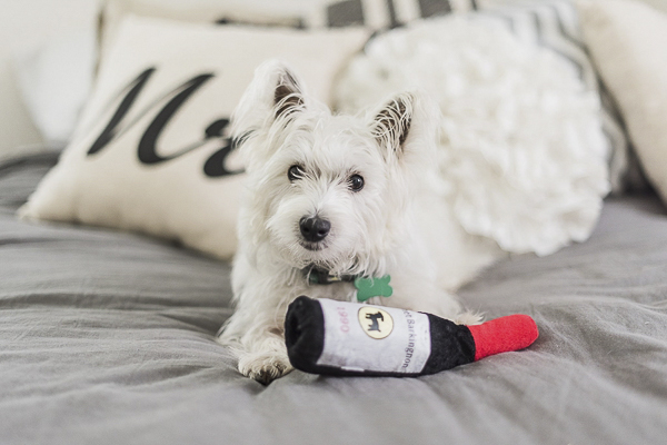 Megan Travis Westie with wine bottle dog toy, white dog on bed